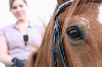 Tiergestützte Therapie Pferd